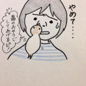 ホジホジ文鳥