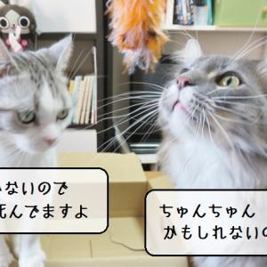 猫の道具 ~釣りざおセッティング~