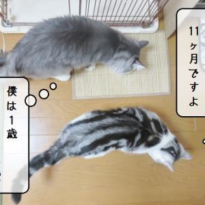 猫雑記 ~2019年9月の猫様体重測定~