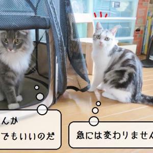 猫雑記 ~またまた換毛期?~