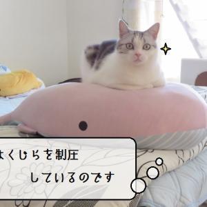 猫雑記 ~秋の入り口の猫様達~