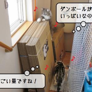 猫雑記 ~荷造り用ダンボール箱~