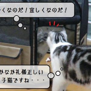 猫動画 ~「初めてのご挨拶なのだ!」~