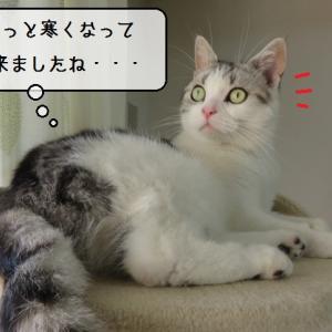 猫雑記 ~猫様達の秋の始まり~