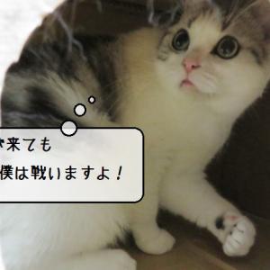 猫雑記 ~ダンボール猫タワー解体現場~