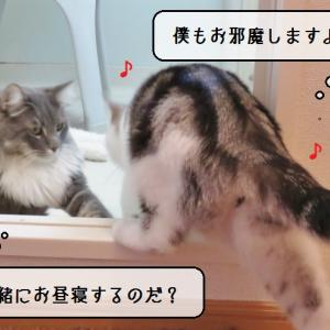 猫雑記 ~激しすぎる気温差の中の換毛期~