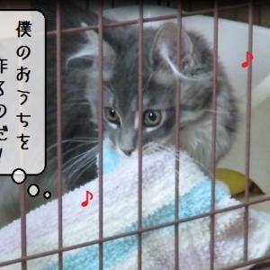 猫動画 ~「僕のおうちを作るのだ!」~