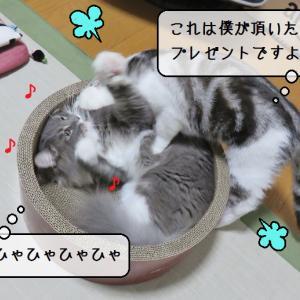 猫の道具 ~すずめ2歳のお誕生日~