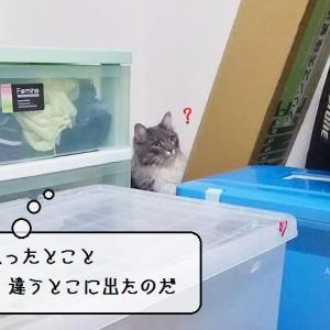 猫雑記 ~これぞ真のダンボール部屋!~