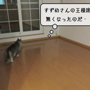 猫雑記 ~積み込み完了!~