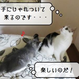 猫動画 ~「遊んであげてるわけじゃないのです」~