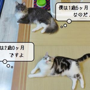 猫雑記 ~2019年10月の猫様体重測定~