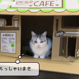 猫雑記 ~猫カフェ始めました~