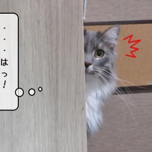 猫雑記 ~新しい形のブログお手伝い~