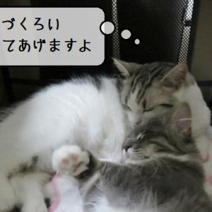 猫動画 ~「僕が毛づくろいしてあげますよ」~