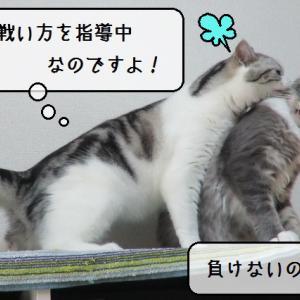 猫動画 ~「静かなる戦い」~