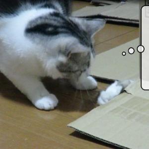 猫動画 ~「虫がいるのです!」~