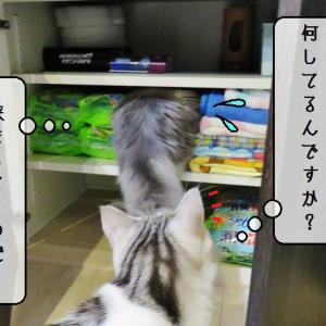 猫雑記 ~狭すぎるもの困る~