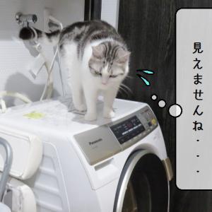 猫雑記 ~アウトローに憧れる~