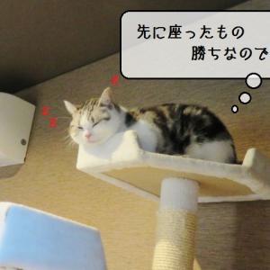 猫雑記 ~むくだけの秘密基地~