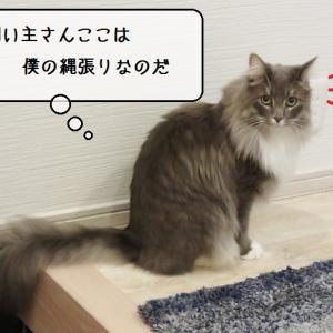 猫雑記 ~むくの安心安全ニャルソック~