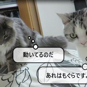 猫動画 ~「もぐらがいますよ!」~