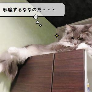 猫雑記 ~誰の仕業・・・?~