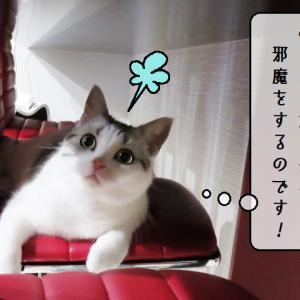 猫雑記 ~すずめ捜索隊~
