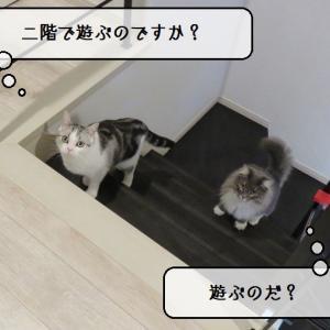 猫雑記 ~遊びへの半強制的お誘い~