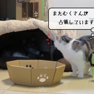 猫雑記 ~すれ違いの猫様達~