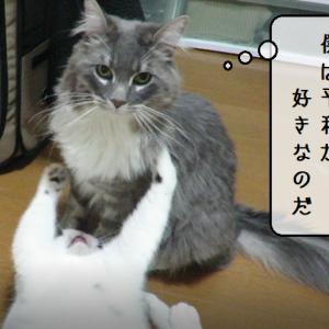 猫動画 ~「傷つけたくないのだ」2019.06.05~