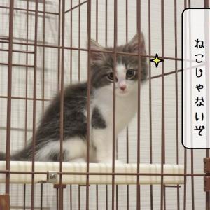 猫雑記 ~結託する猫様達~