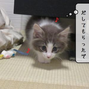 猫雑記 ~「暴れん坊てん」一部開放~