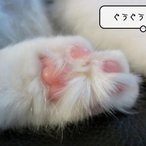 猫雑記 ~居るのが当たり前の生活に~