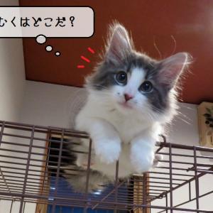 猫雑記 ~やっぱり君も登るのか・・・~