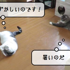 猫動画 ~「恥ずかしいので見ないで下さい!」2019.07.03~