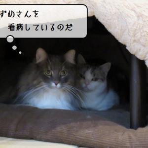 猫雑記 ~奇跡の寄り添う猫様達~