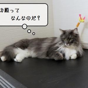 猫の道具 ~わが家の遺跡「キャッチミーイフユーキャン2」発掘!~