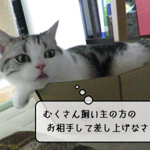 猫動画 ~「飼い主さんと遊んであげるのだ」2019.07.08~