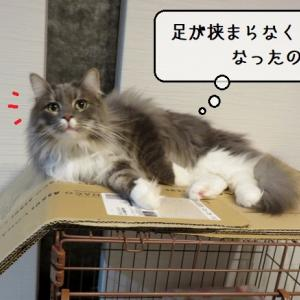 猫雑記 ~むくの新たな秘密じゃない秘密基地~