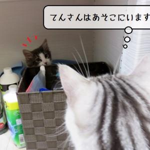猫雑記 ~てんの新たなお昼寝場所(バケツ編)~