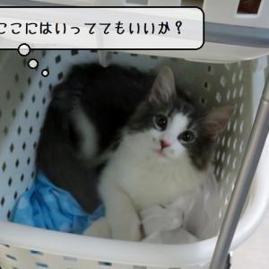 猫雑記 ~最近のお風呂タイムの猫様達~