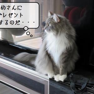 猫雑記 ~そんなところに隠してなどいない~