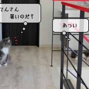 猫雑記 ~体感温度の違うわが家の猫様達~