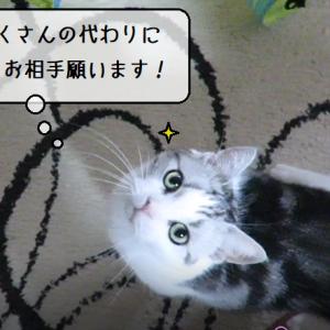 猫動画 ~「戦闘訓練が足りないのです!」2019.08.23~