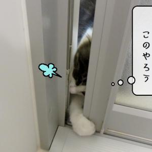 猫雑記 ~濡れても全く構わない子猫様てん~