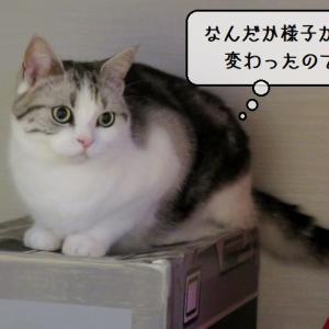 猫雑記 ~夏仕様に戸惑う猫様達~