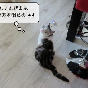 猫の病気 ~「暴れん坊子猫様てん」いよいよ去勢手術へ出発~