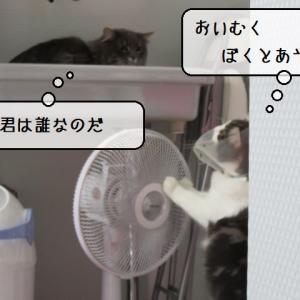 猫雑記 ~「カラー仕様てん」に全然慣れない猫様~