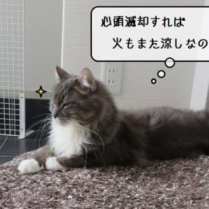 猫雑記 ~微小猫様達と巨大猫様達~